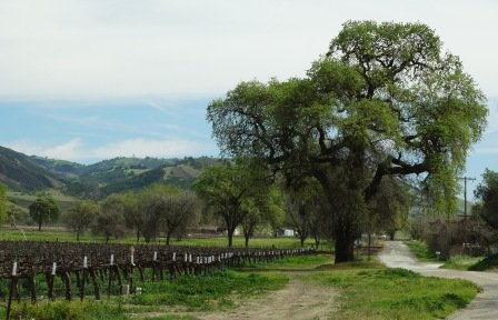 Country roads, rolling hills and vineyards