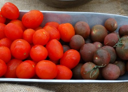 Hydroponic and heirloom tomatoes