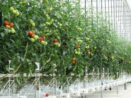 True Green Greenhouses (17)